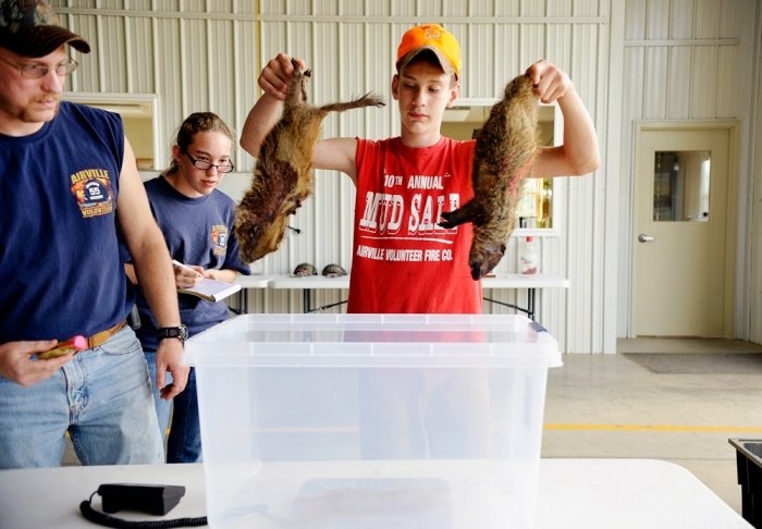 "James Parsons IV, 13, lowers two dead groundhogs into a tub on top of a scale to be weighed together, as his father and volunteer firefighter James watches and as his twin sister Rebecca, 13, stands by to record weights on Saturday, June 15, 2013. The groundhogs were two of nine brought in by Steve Wilson of Lower Chanceford Township, who registered in Airville Volunteer Fire Company's first-ever groundhog hunt fundraiser. ""Now I get the dubious pleasure of getting rid of them,"" Wilson said as he scooped the carcasses back into the bin in which he'd brought them. Airville Volunteer Fire Company hosted a groundhog hunt fundraiser, registering 38 local hunters who hunted for groundhogs on Friday and Saturday, June 14-15, 2013. Two prizes -- one for the heaviest groundhog and one for the most kills -- were awarded. DAILY RECORD/SUNDAY NEWS - CHRIS DUNN"