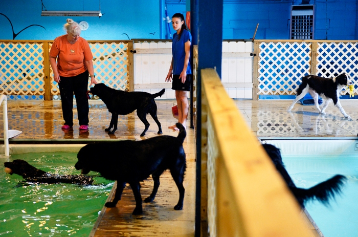 Morgan's Paws Pet Care Center dog handlers Roxanne Smeltzer, left, and Rikki Herbst keep an eye on six dogs and the two heated pools during the daily one-hour pet swim session on Wednesday, Jan. 8, 2014. Dogs enrolled in Morgan's Paws Pet Care Center in Spring Garden Township have access to two heated pools for an hour-long session, while dogs not enrolled can participate in private or open swim sessions. Chris Dunn — Daily Record/Sunday News